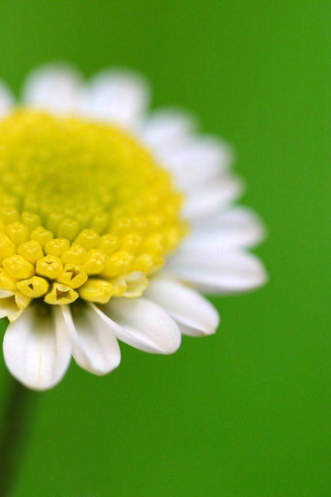 acupuncture effective for allergic rhinitis Acupuncture Effective for Allergic Rhinitis daisy 683x1024