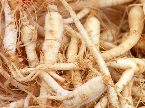 all about ginseng All About Ginseng dreamstime 8276664 480x358