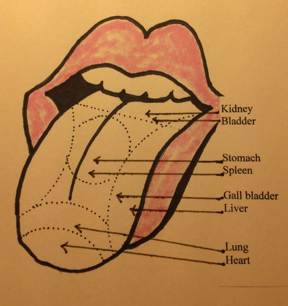 excerpt from adventures in chinese medicine: your tongue is a map of your organs Excerpt From Adventures in Chinese Medicine: Your Tongue Is A Map Of Your Organs Image 965x1024